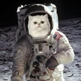 Avatar kot_astronauta