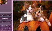 Puzzle kotki