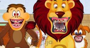 Dentysta zwierząt