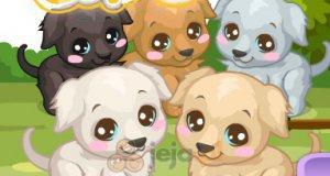 Opiekowanie się labradorami