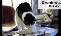 Jak koty odreagowują walentynki