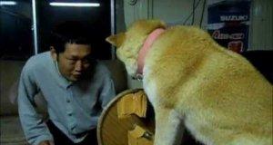 Pies, który nie lubi całusów