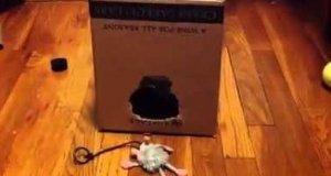 Kot i pudełko
