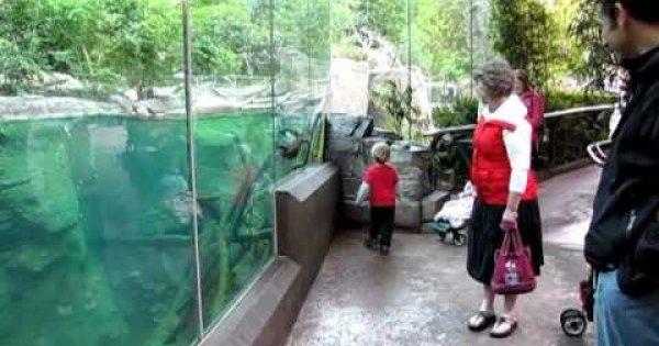 Dziecko vs wydra