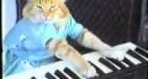 Keyboardowy kot