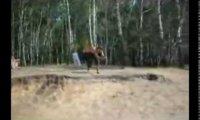 Polish Stunts 2
