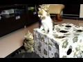 Małe, nieporadne, ale śmiesznie kociaki