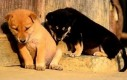 Bardzo senne zwierzaki