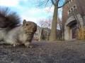 Wiewiórka kradnie kamerę