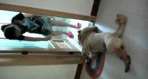 Pies nie chce iść pod prysznic, więc udaje martwego