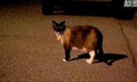 Kot, który stale przywłaszczał rzeczy sąsiadów