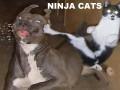 Zdjęcia kotków