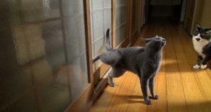 Kot, który nie czeka bezczynnie