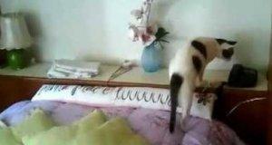 "Kot odbiera telefon i mówi ""Halo?"""