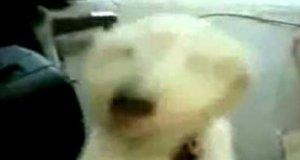 Heavy metalowy pies
