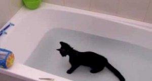 Kot, który lubi wodę