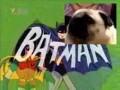 "Mopsik woła ""Batman"""