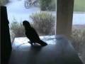 Techno papuga
