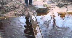 Kot nie chce przemoczyć łapek