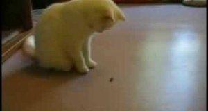 Kot vs Mucha