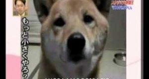 Przyciszający się pies