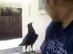 Pyskujący ptak