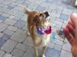 Niesprytny pies
