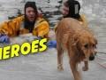 Strażacy ratują psa z zamarzniętej rzeki