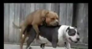 Psia miłość