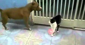 Kot Jedi vs Dwa psy