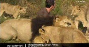 Przyjaciel lwów