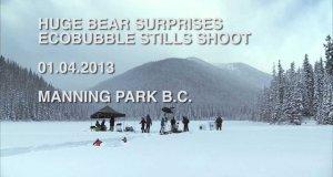 Wielki niedźwiedź na planie reklamy