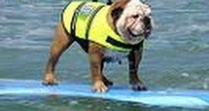 Pies surfer