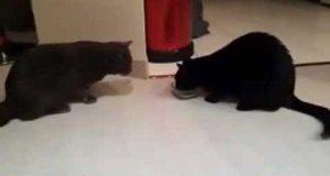 2 koty, 1 miseczka