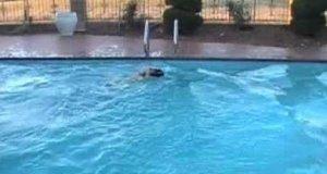 Basen i zjeżdżalnia to raj dla tego psa