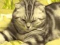 Kompilacja dziwnie zachowujących się kotów