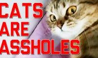 Niedobry kotek - kompilacja FailArmy
