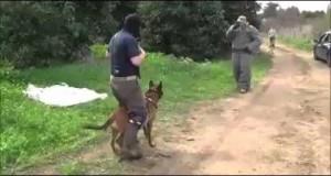Szkolenie psów w jednostkach antyterrorystycznych Izraela