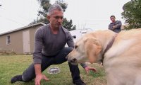 Zaklinacz psów dostaje za swoje