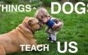Czego możemy nauczyć się od psów?