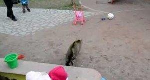 W Sowieckiej Rosji to kot goni psa!