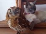 Kot i sowa - para najlepszych przyjaciół