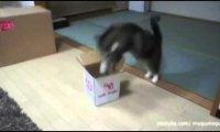 Gdzie się może zmieścić koteł