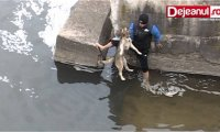 Radość i wdzięczność uratowanego psiaka