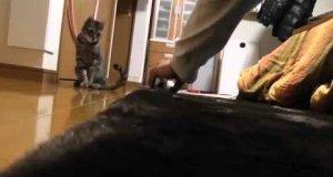 Kot - bramkarz doskonały