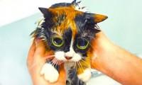 7 Lifehacków - Życie kota
