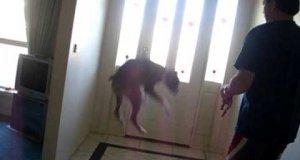 """Reakcja psa na słowo """"spacer"""""""