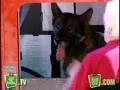 Ukryta kamera - Psi kierowca