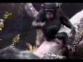 Małpa samobójca