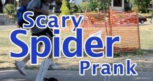 Ukryta kamera - wielgachny pająk